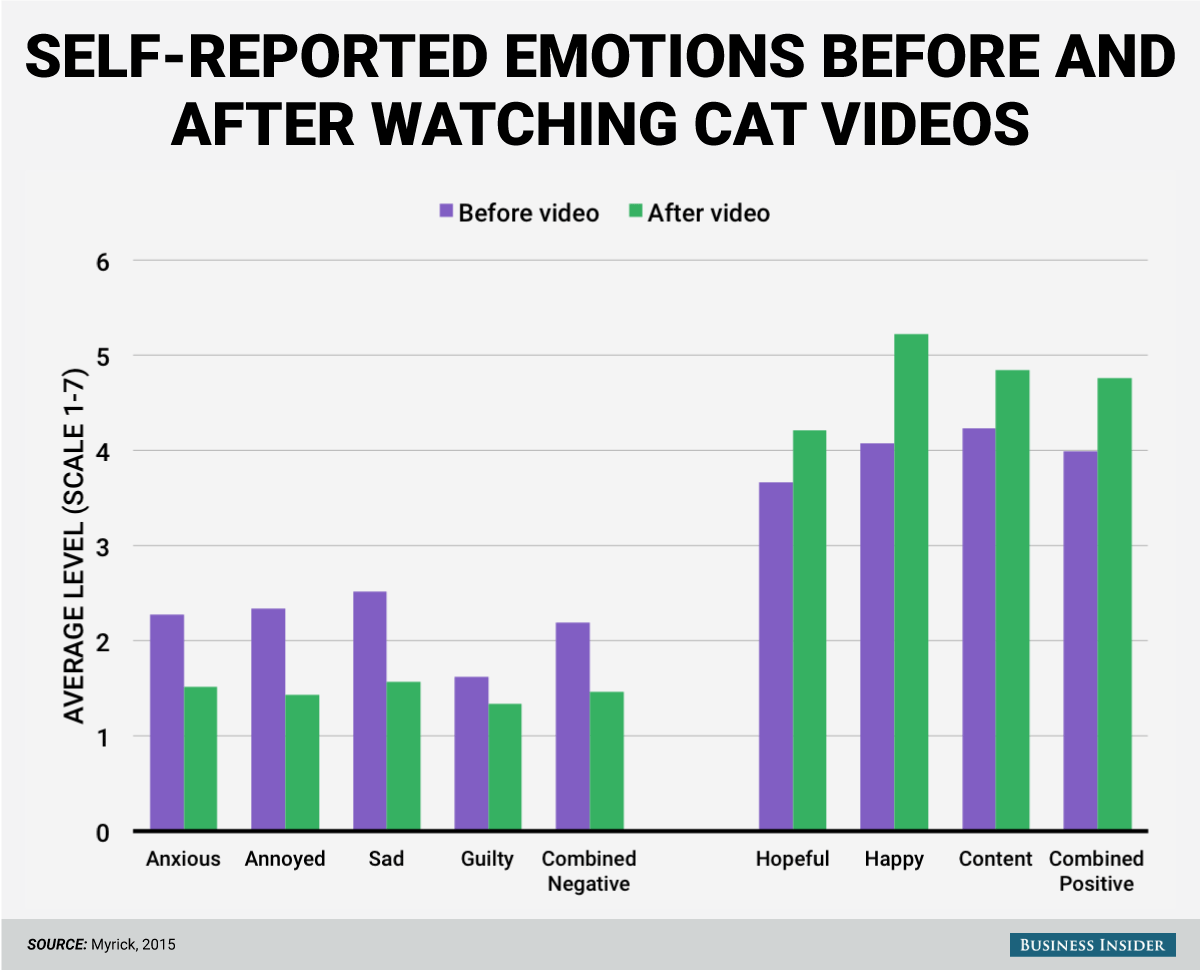 cat-video-emotions-study